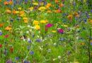 Koszenie traw w mieście – krótki przewodnik